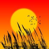 Roseau de coucher du soleil Photo libre de droits