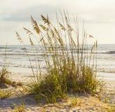 Roseau des sables devant l'océan photo libre de droits