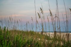 Roseau des sables le long de la route 30A Image libre de droits