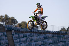 Roseau du Tchad, championnat superbe australien de X Photos stock
