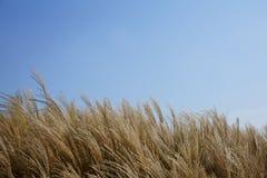 Roseau et ciel Photographie stock