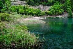 Roseaux, arbres et lac photos libres de droits