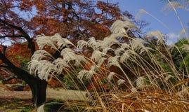 Roseaux au parc d'automne photo libre de droits