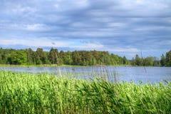 Roseaux d'été contre le lac de pêche Photos stock