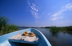 Roseaux de conduite de lagune photos libres de droits