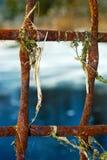 roseaux de grille Images stock