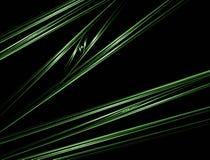 Roseaux de vert Photo stock