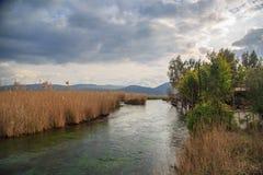 Roseaux en rivière d'azmak dans l'akyaka photographie stock libre de droits