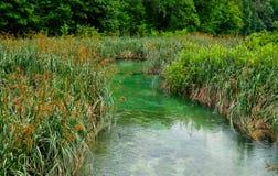 Roseaux et précipitations s'élevant dans des lacs Plitvice, Croatie photos stock