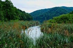 Roseaux et précipitations s'élevant dans des lacs Plitvice, Croatie photographie stock libre de droits