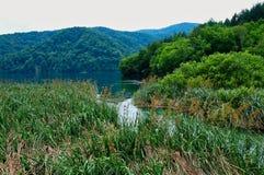 Roseaux et précipitations s'élevant dans des lacs Plitvice, Croatie images stock