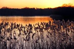 Roseaux et précipitations sur un côté de fleuve au coucher du soleil Photo libre de droits