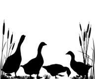 Roseaux et silhouettes d'oie Photos stock