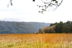 Roseaux, fleuve et ciel Images libres de droits