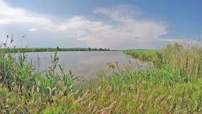 Roseaux minces près du beau lac banque de vidéos