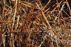 Roseaux par la rivière Photo stock