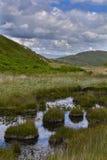 Roseaux sur un étang Image stock