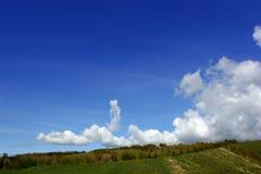Roseaux sur un flanc de coteau photo libre de droits