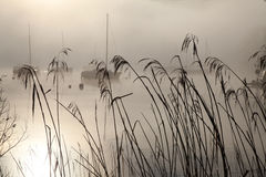 Roseaux sur Windermere images libres de droits