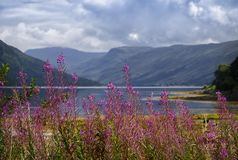 Loch Fyne in Scotland Stock Image