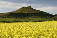 Roseberry Topping. In North Yorkshire England with rapeseed crop in the foreground Stock Images