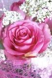 Rosebud Stockfoto
