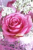 Rosebud Stock Foto