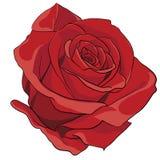 rosebud Lizenzfreies Stockbild