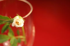 Rosebud. Tiny rosebud in a glass on a red background stock image