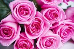 Rosebud closeup Royalty Free Stock Photos