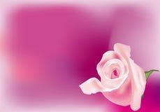 Rosebud cor-de-rosa Imagem de Stock Royalty Free