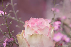 Rosebud and forgetmenot flowers, pink toned Royalty Free Stock Photo