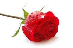 Rosebud mit Wassertropfen Stockfotos