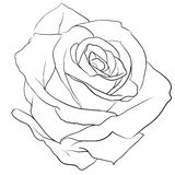 Rosebud. Rose black and white, like a tattoo Royalty Free Stock Photo