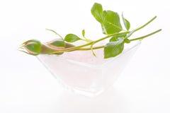 Rosebuds изолированные на белой предпосылке для курорта Стоковая Фотография RF