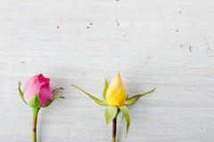 2 rosebuds на белой предпосылке Стоковые Фото