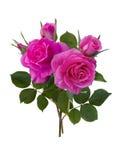 Rosebuds с зелеными листьями Стоковые Фото