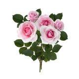Rosebuds с зелеными листьями Стоковые Изображения RF