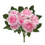 Rosebuds с зелеными листьями Стоковое Фото