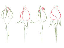 Rosebuds. Stock Images