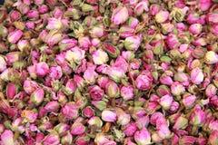 Rosebuds Stock Image