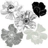rosebuds Stock Foto's