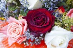 Rosebuds closeup Stock Images