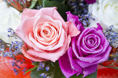 Rosebuds closeup Stock Photos