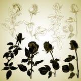 Rosebuds, schets Vector Illustratie