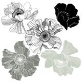 rosebuds Stock Photos