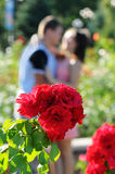 Rosebush also kiss couple Royalty Free Stock Photo