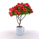 Rosebush grow from cup. On white background Stock Images