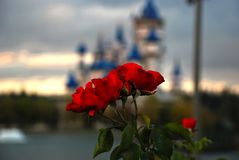 Rosebush mit Schlosshintergrund Stockfotos