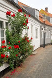 Rosebush Street. A Danish street withe a white house and a rosebush in the southwestern part of Denmark Royalty Free Stock Images